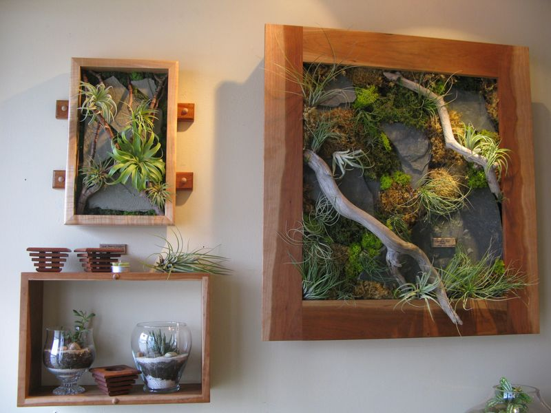 Tillandsia living walls 003